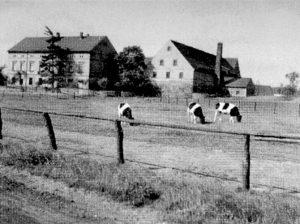 Der Hof Arnold in Molbitz um 1940