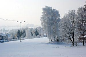 Fichtenhainichen im Winter