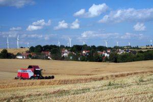 Getreideernte auf den Feldern um Gorma